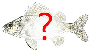 Identification espèce